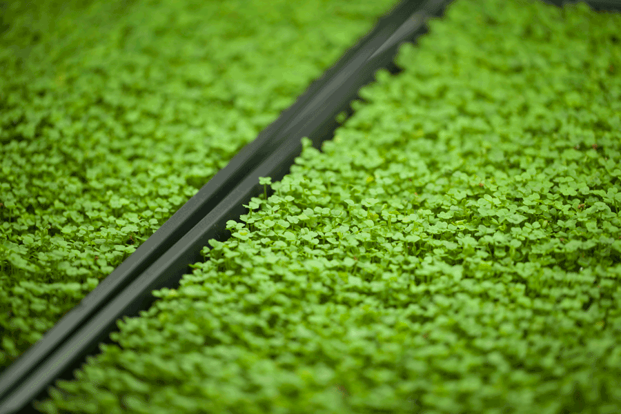 gardening-healthy-food